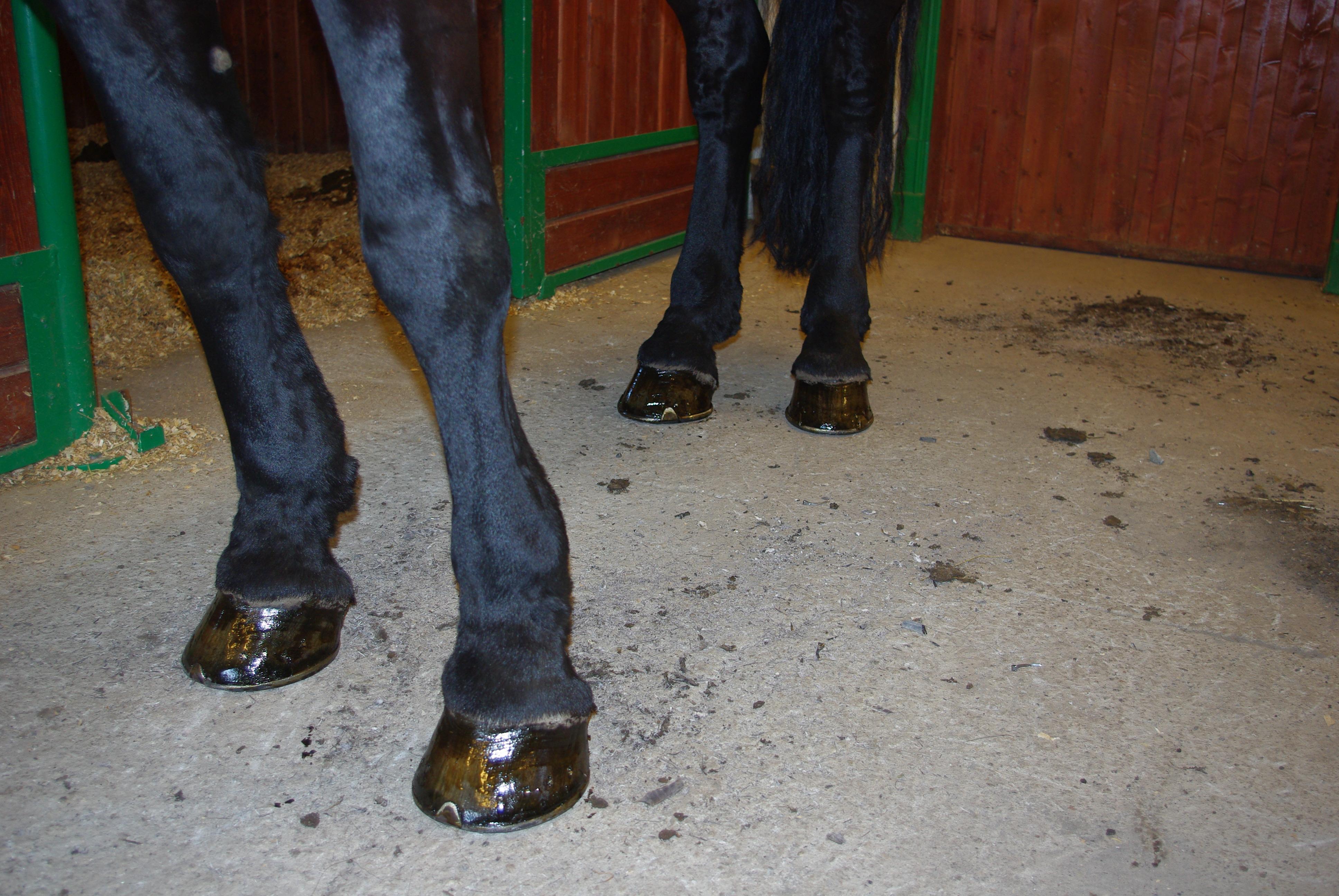Når skomakerens barn endelig får sko