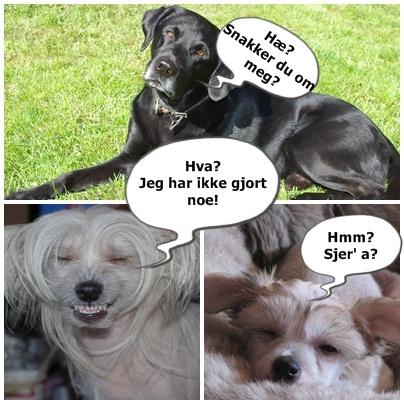 powder puff hunde