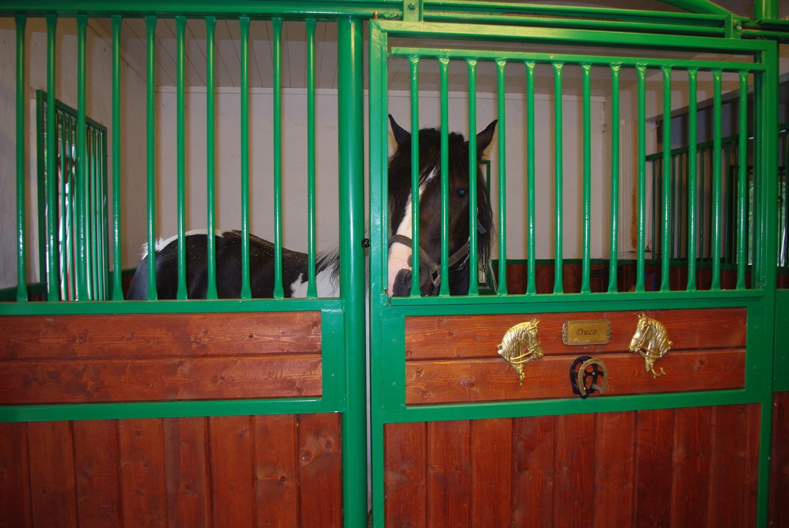 slipper ikke ut hestene